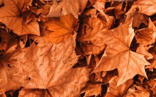 poza cu frunze