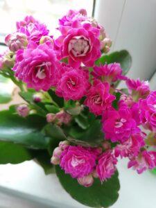 lucruri interesante flori roz și mici
