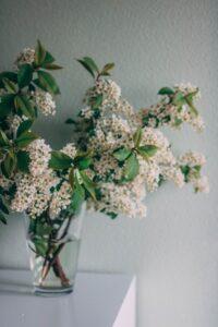 florile miresei