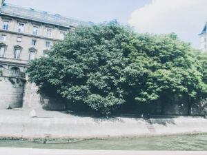 sena în paris