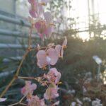 seră grădina botanică