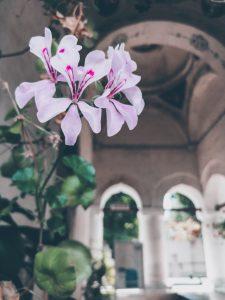biserica mogosoaia