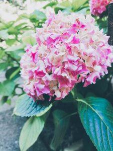 flori muzeu