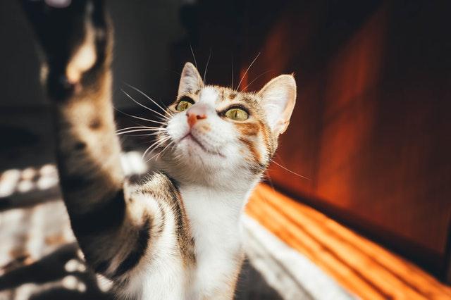 pisici drăguțe