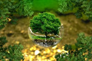 cum protejăm mediul