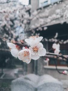 lucruri frumoase aprilie
